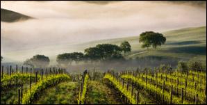 Case Study - Trinchero Wineries